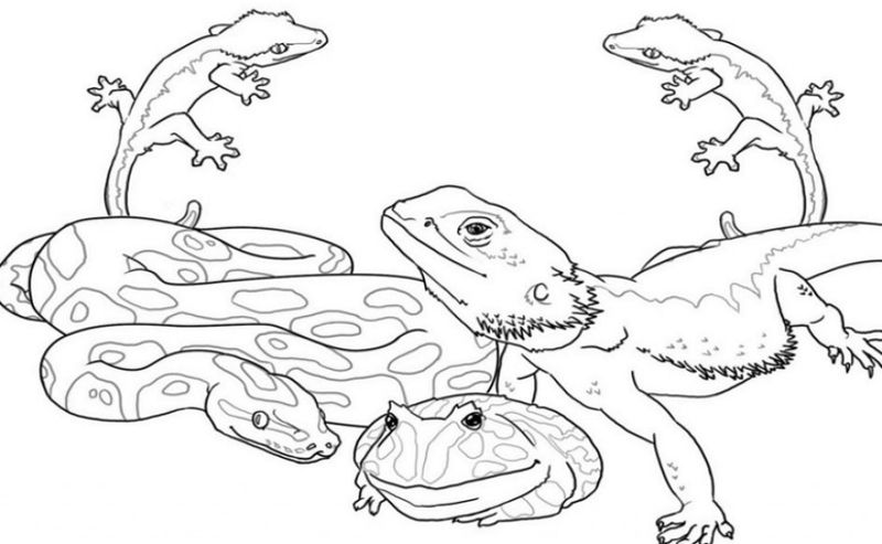 Adult Coloring Pages Of Animals