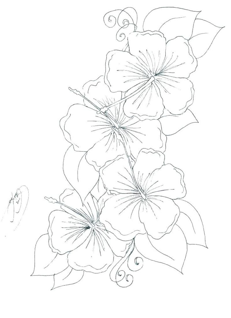 Alaska Flowers Coloring Pages