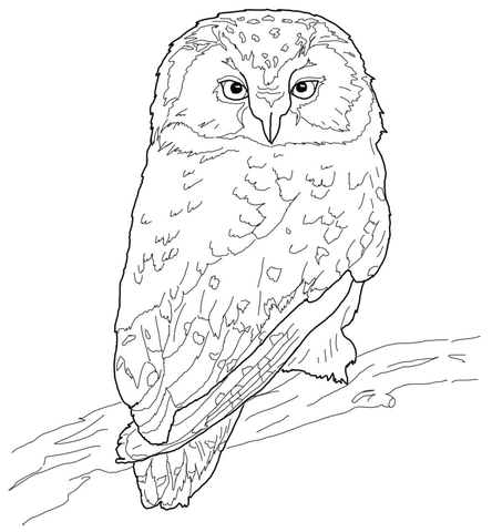 An Owl Coloring Page