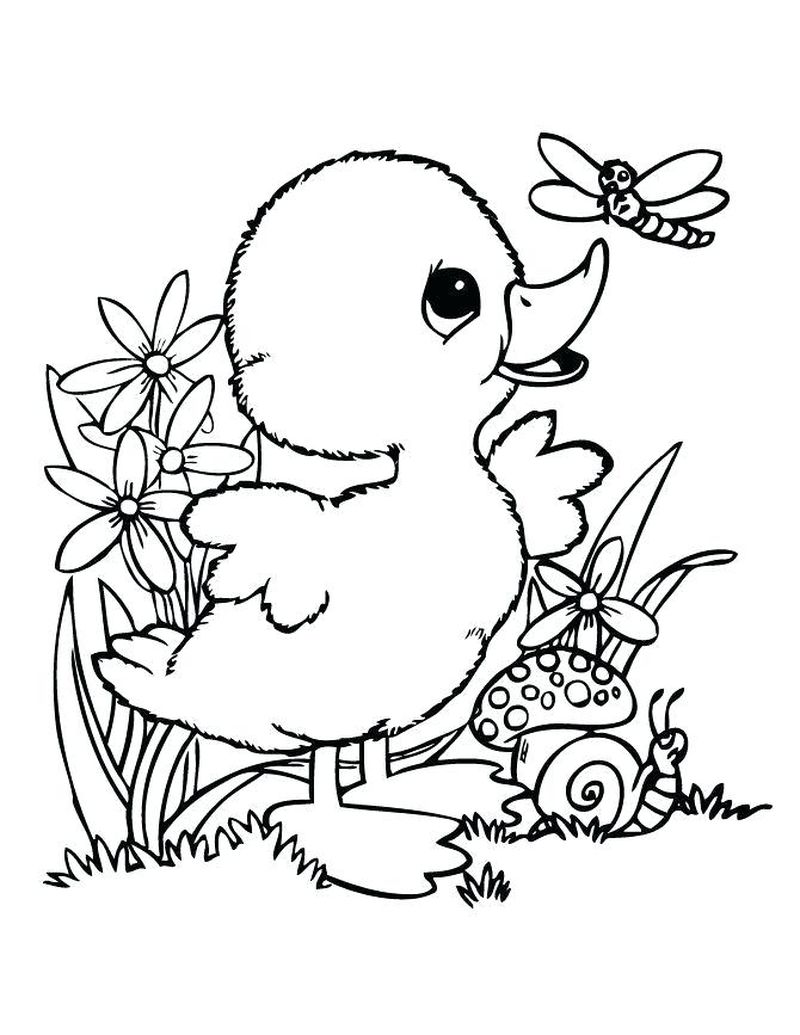 Animals Coloring Pages To Print