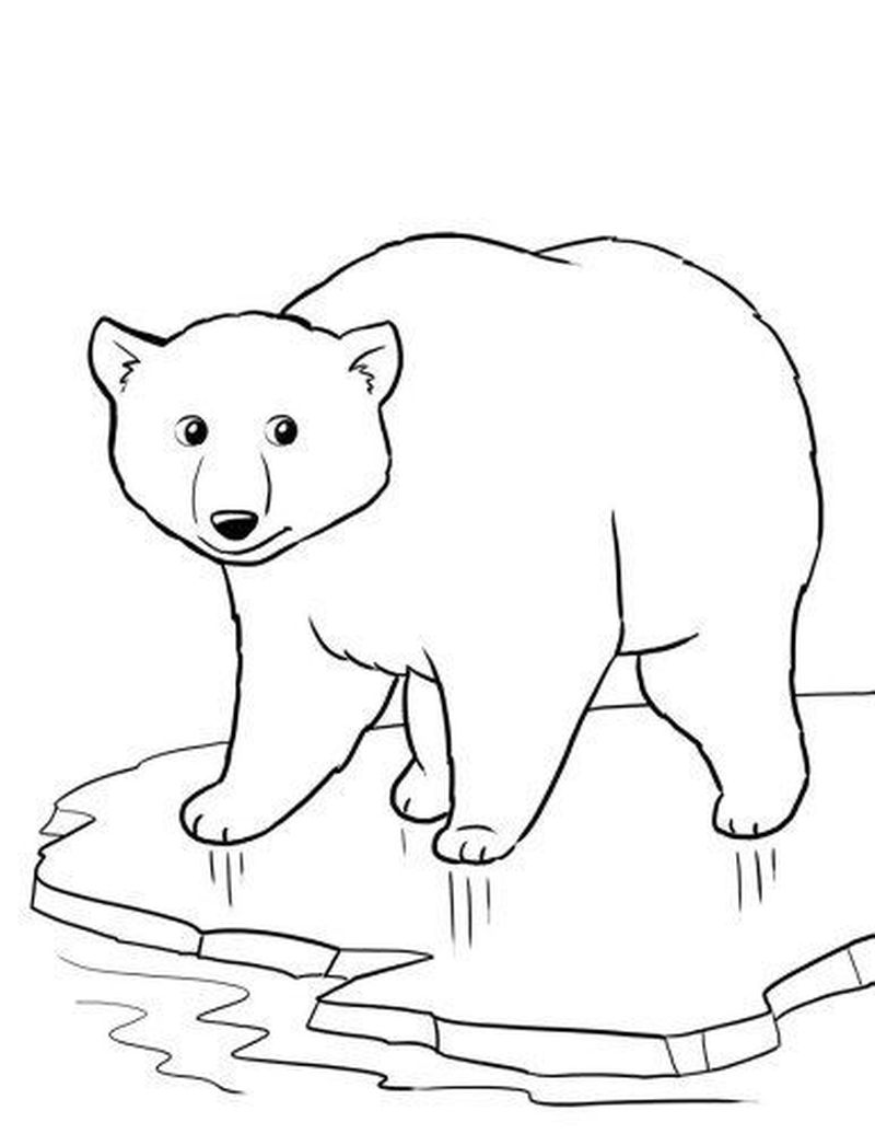 Awana Cubbie Bear Coloring Page