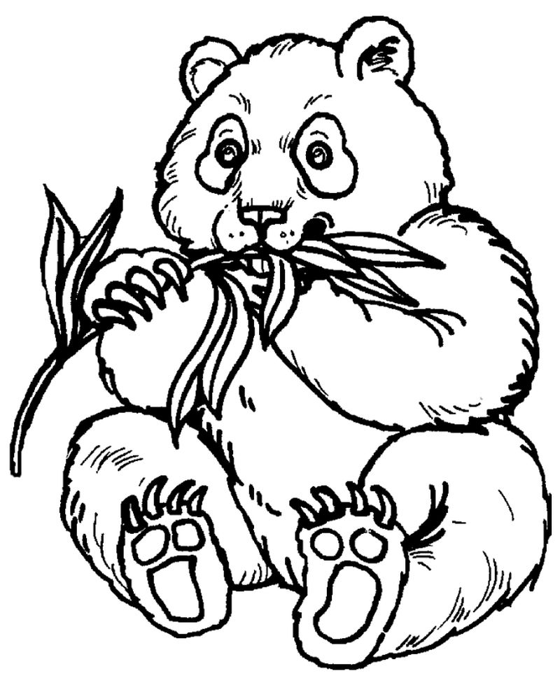 Baby Bus Panda Coloring Pages
