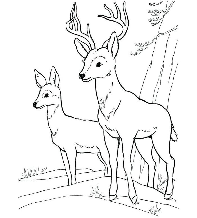 Baby Deer Coloring Pages