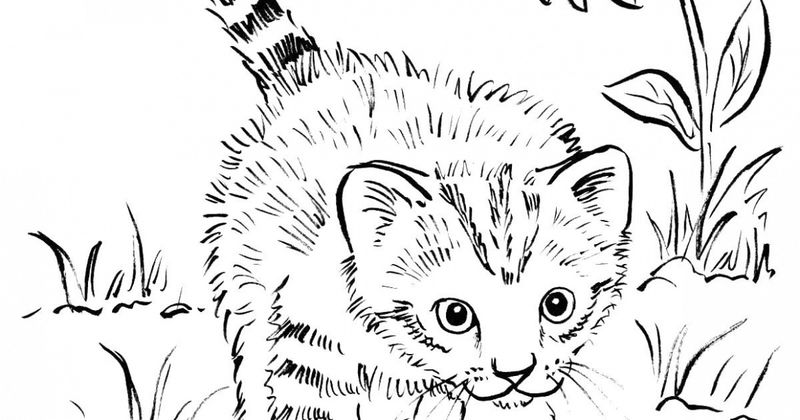 Baby Kitten Coloring Pages