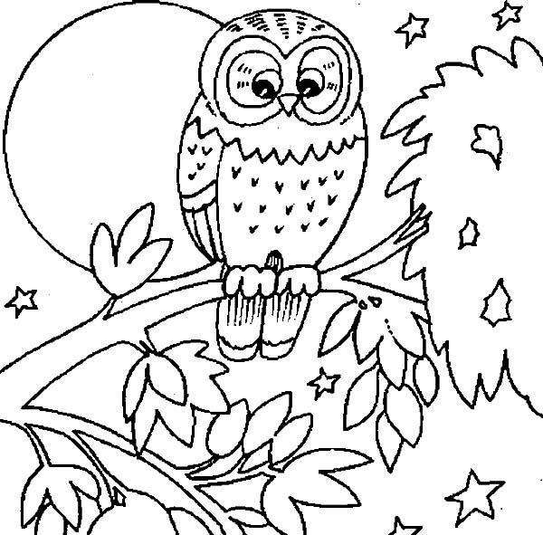Baby Owl Coloring Page