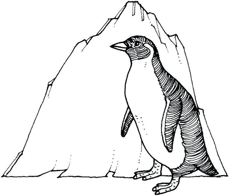 Baby Penguin Coloring Pages