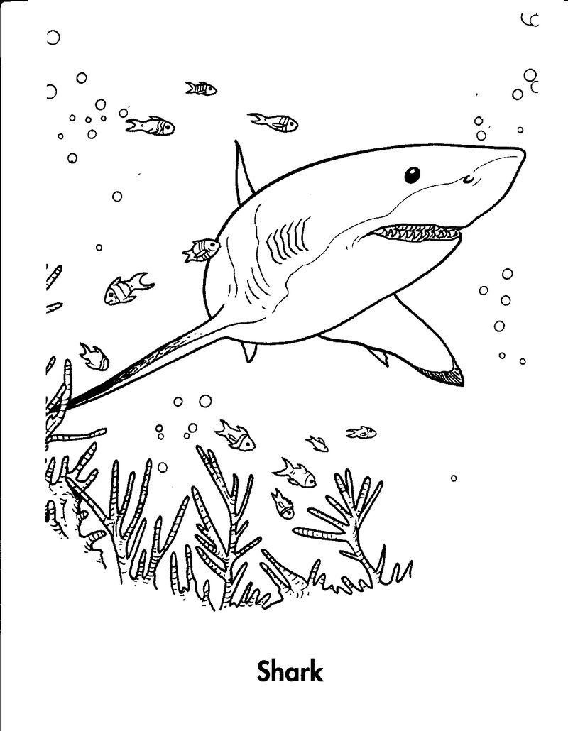 Baby Shark Coloring Page