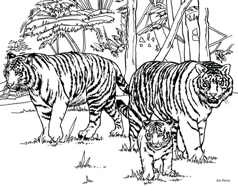 Baby Tigers Coloring Pages
