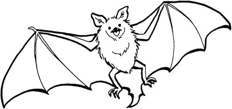 Ball And Bat Coloring Pages