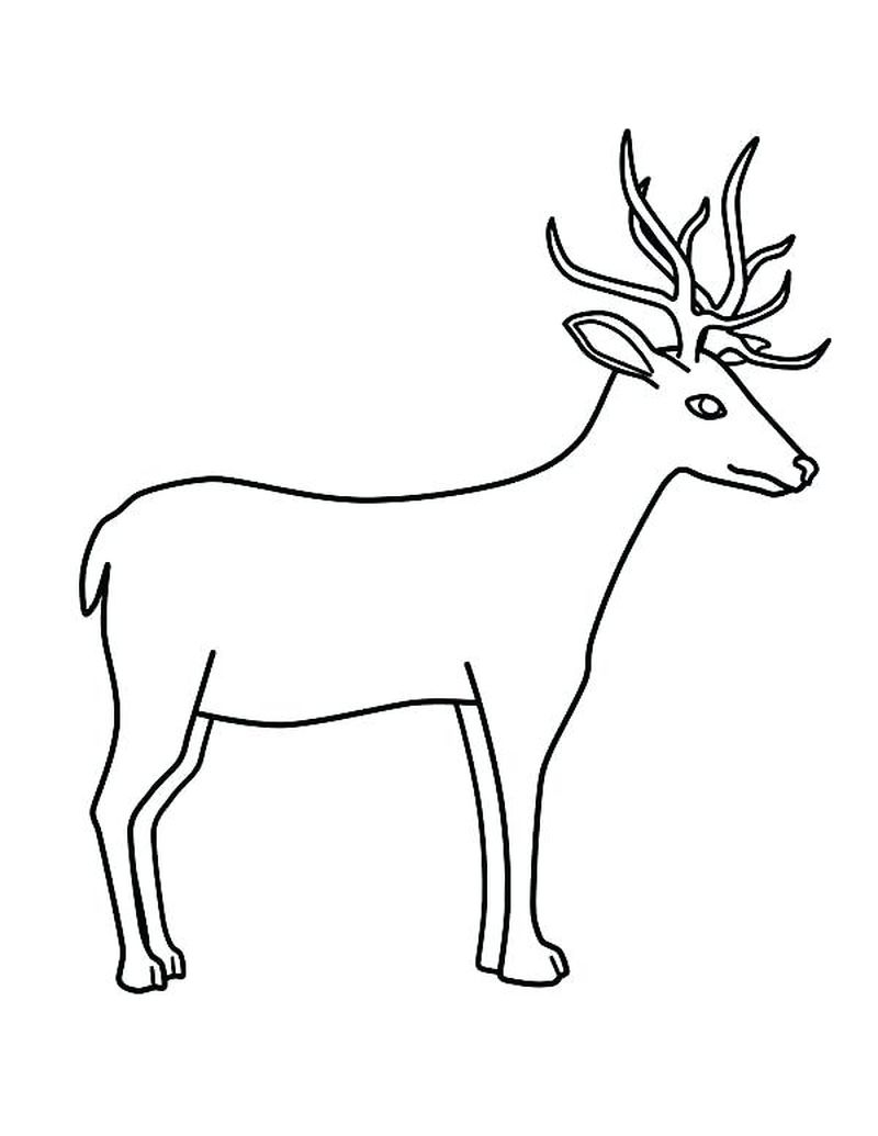 Bambi Deer Coloring Pages 1