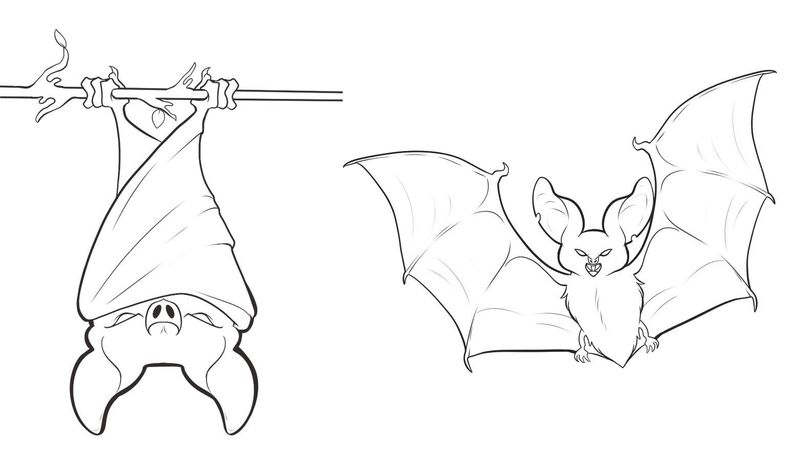 Bat Coloring Pages For Kids Printable Free