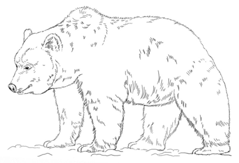 Bear And Bunny Coloring Page