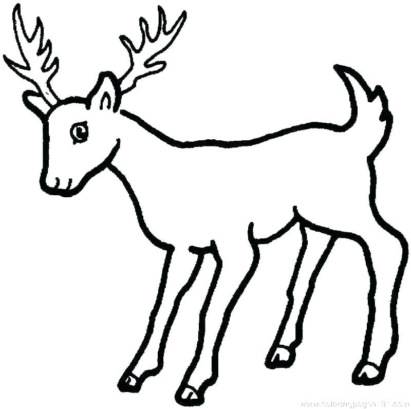 Bear And Deer Coloring Pages