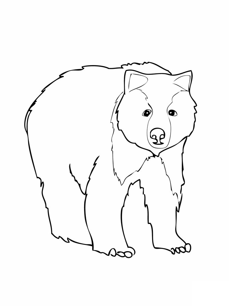 Bear Coloring Page For Preschool