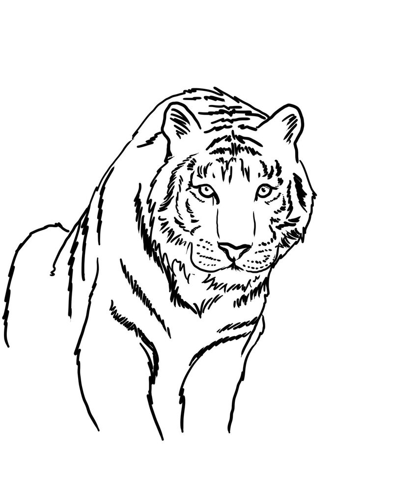 Bengal Tiger Coloring Pages