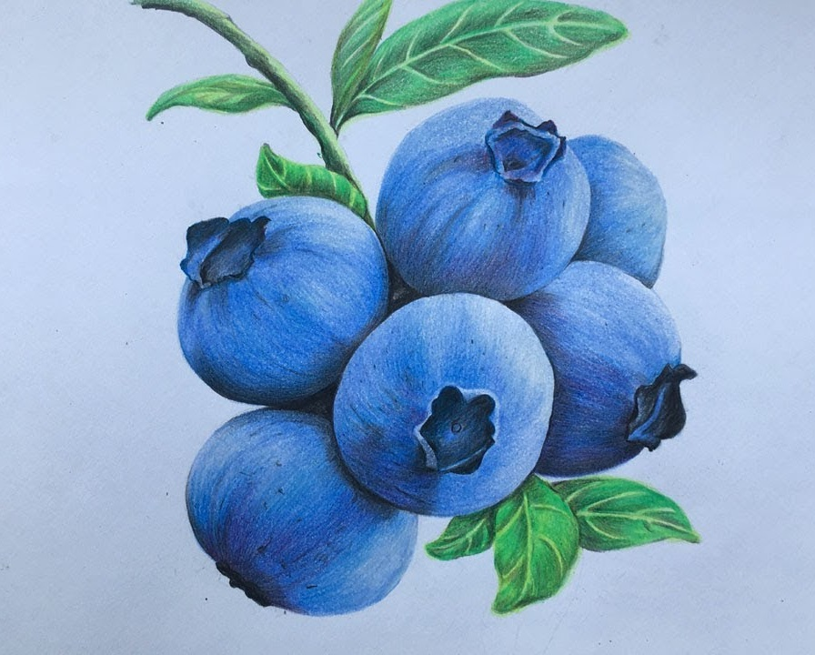 Bilberry Coloring