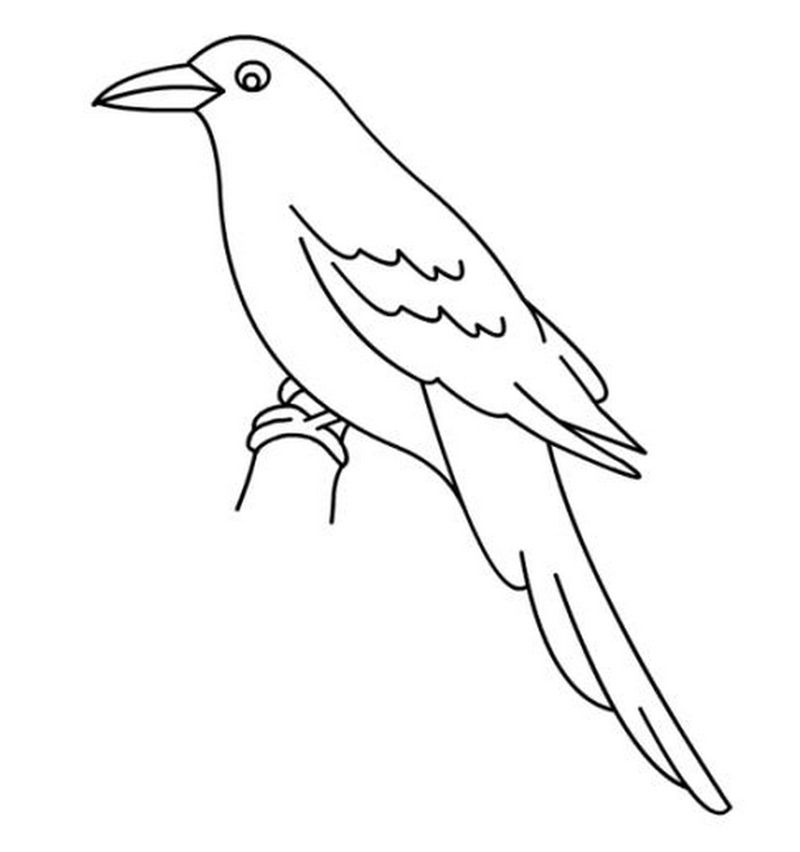 Bird Coloring Pages For Toddlers