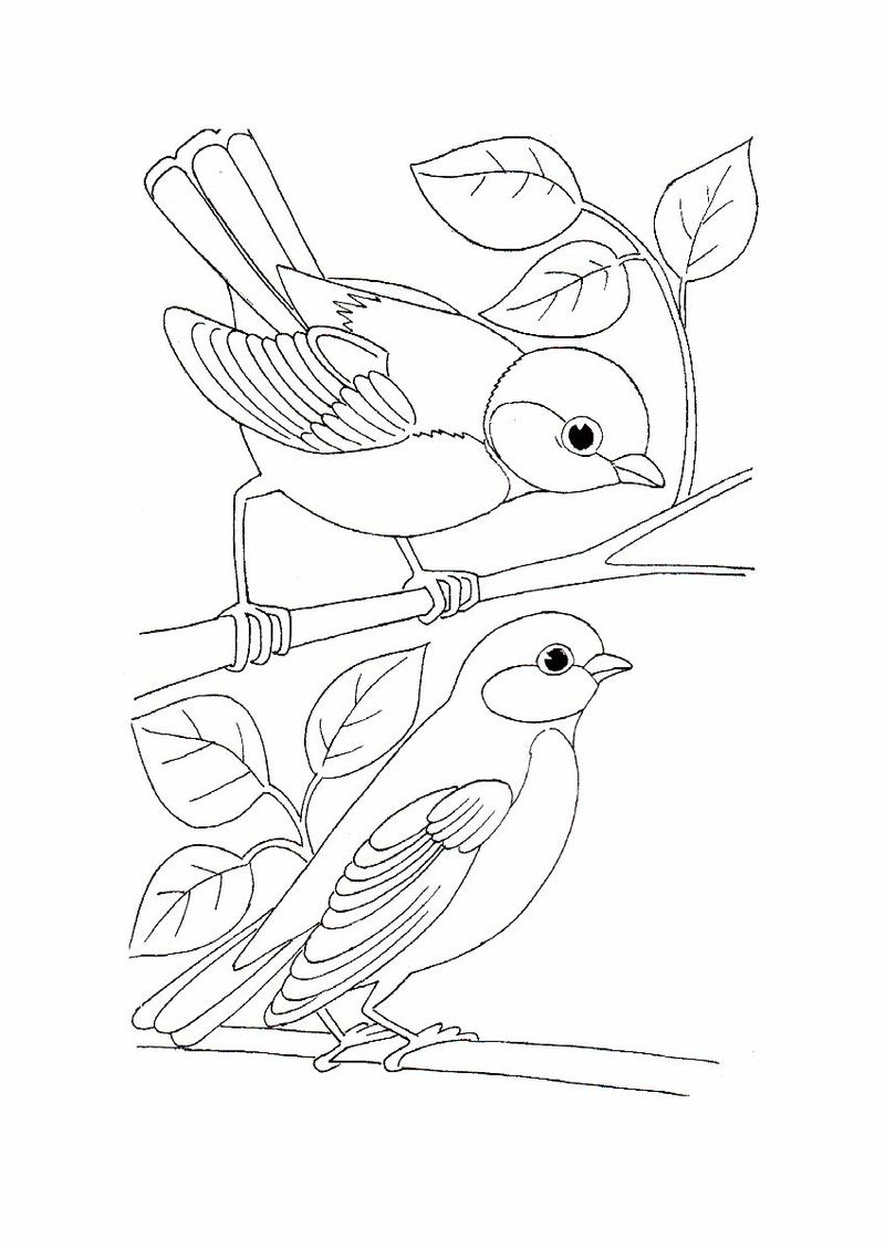 Bird Coloring Pages Images