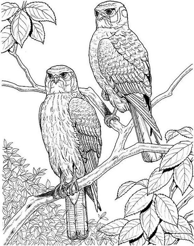Bird Coloring Pages Online