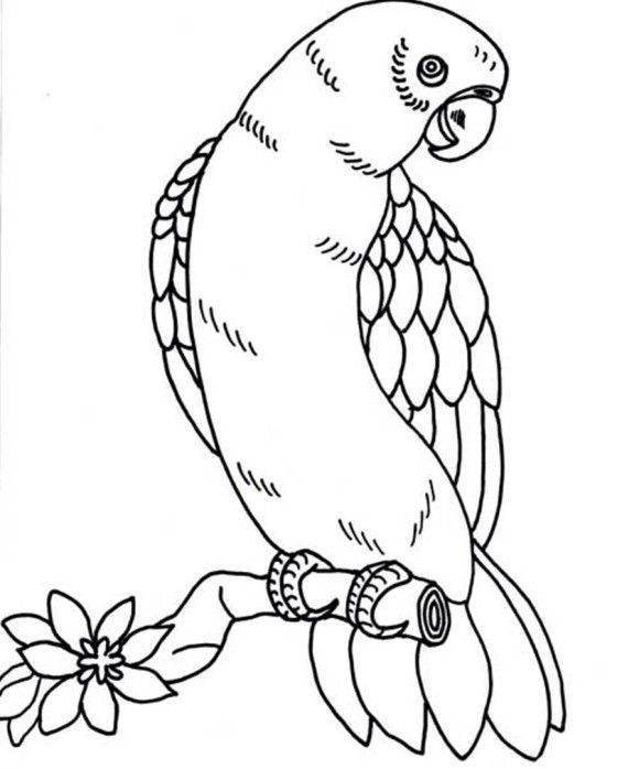 Black And White Owl Coloring Page