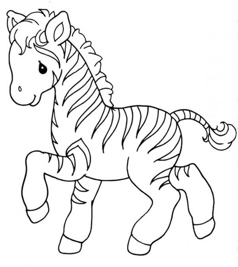 Blank Zebra Coloring Pages
