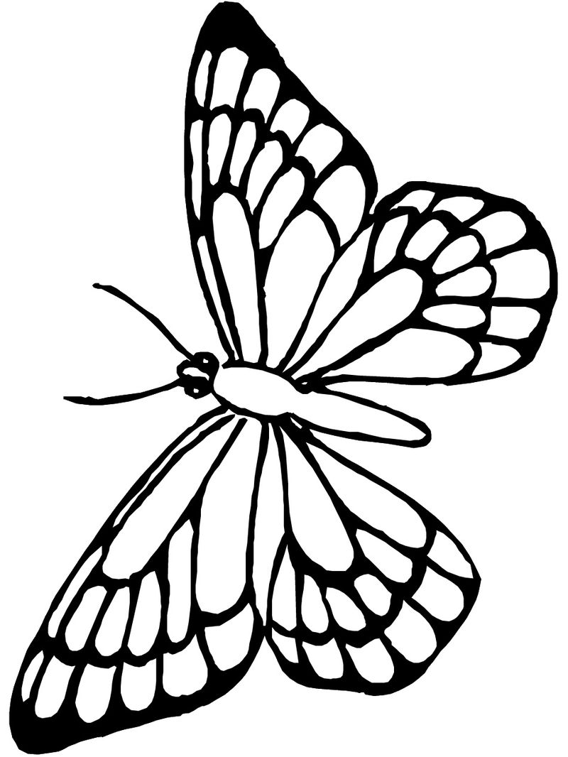 Butterfly Coloring Pages For Preschoolers
