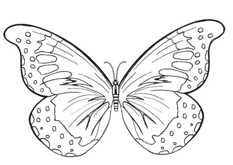 Butterfly Coloring Pages Printable Free