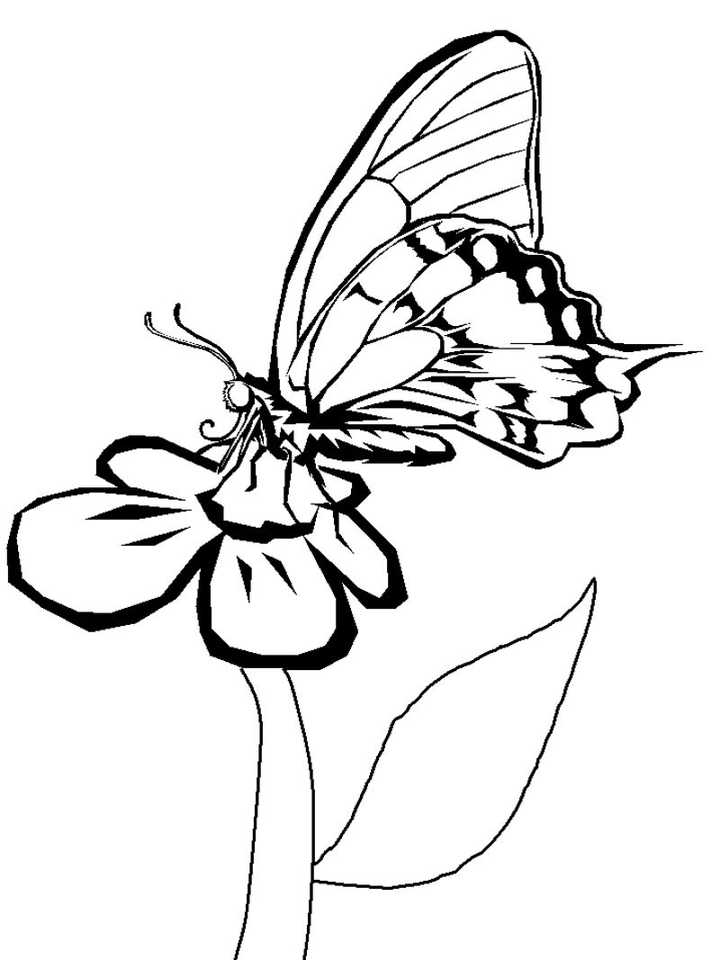 Butterfly Coloring Pages To Print Out