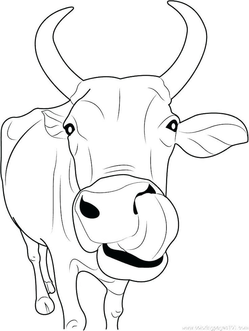 C Is For Cow Coloring Pages