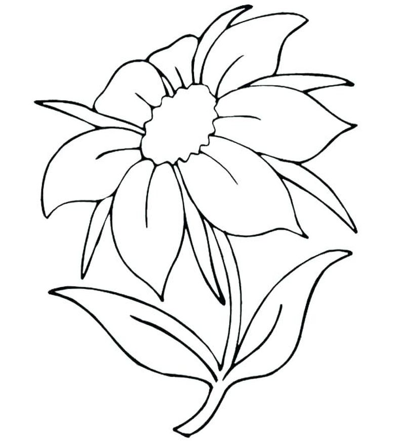 Carnation Flowers Coloring Pages