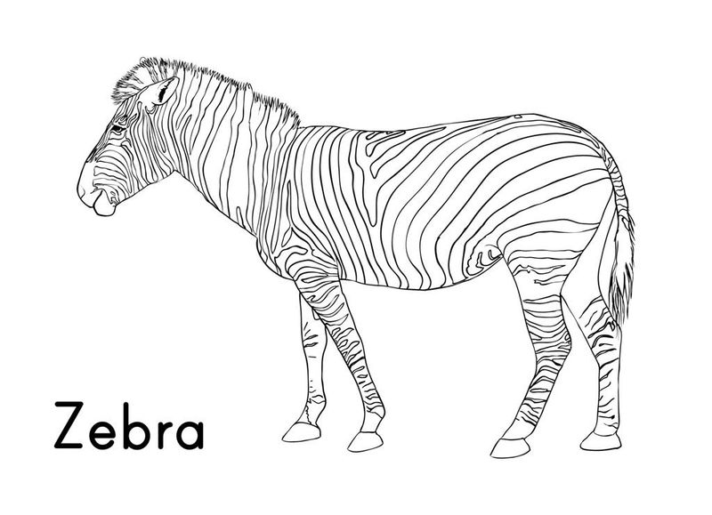 Cartoon Zebra Coloring Pages