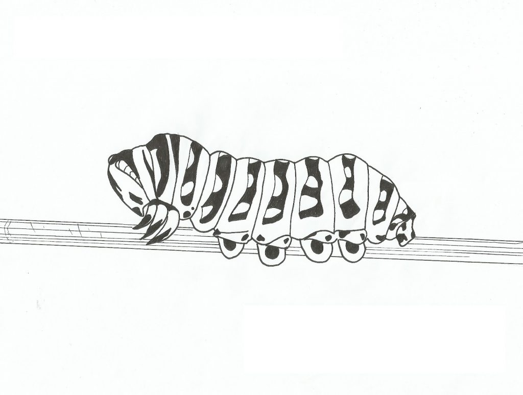 Caterpillar Coloring Pages For Toddlers