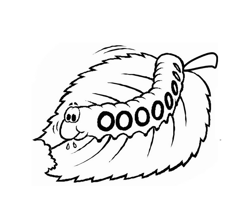 Caterpillar Face Coloring Pages