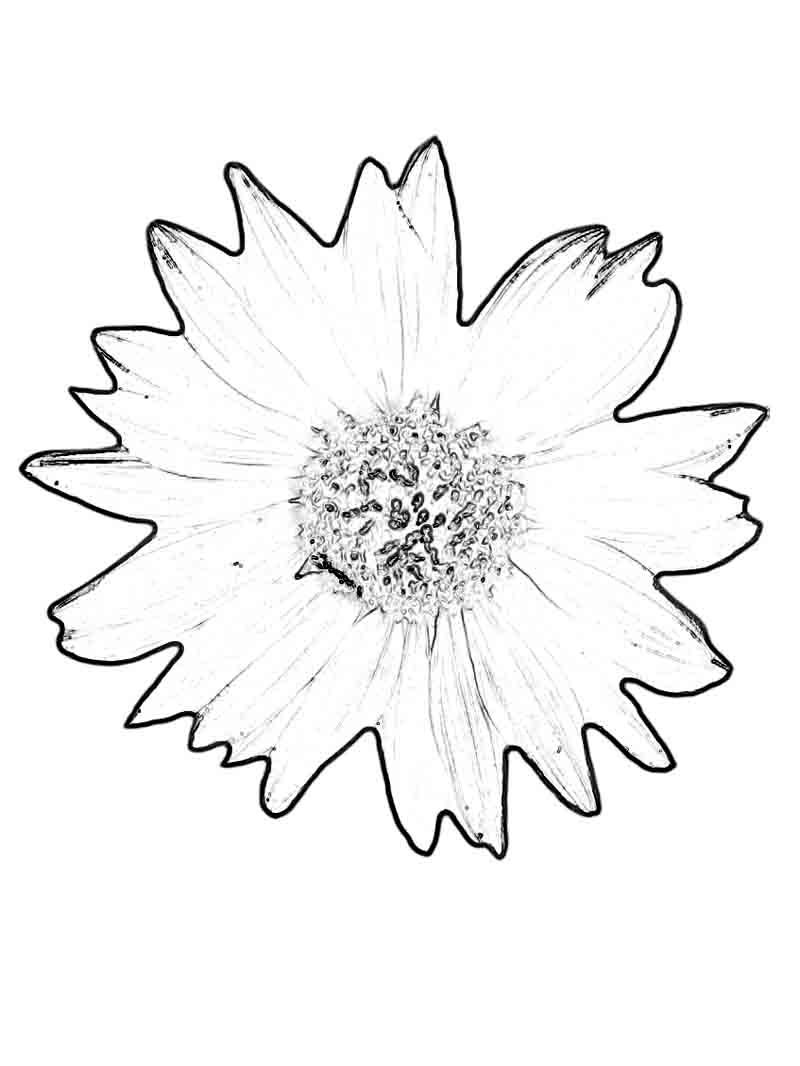 Cats And Flowers Coloring Pages