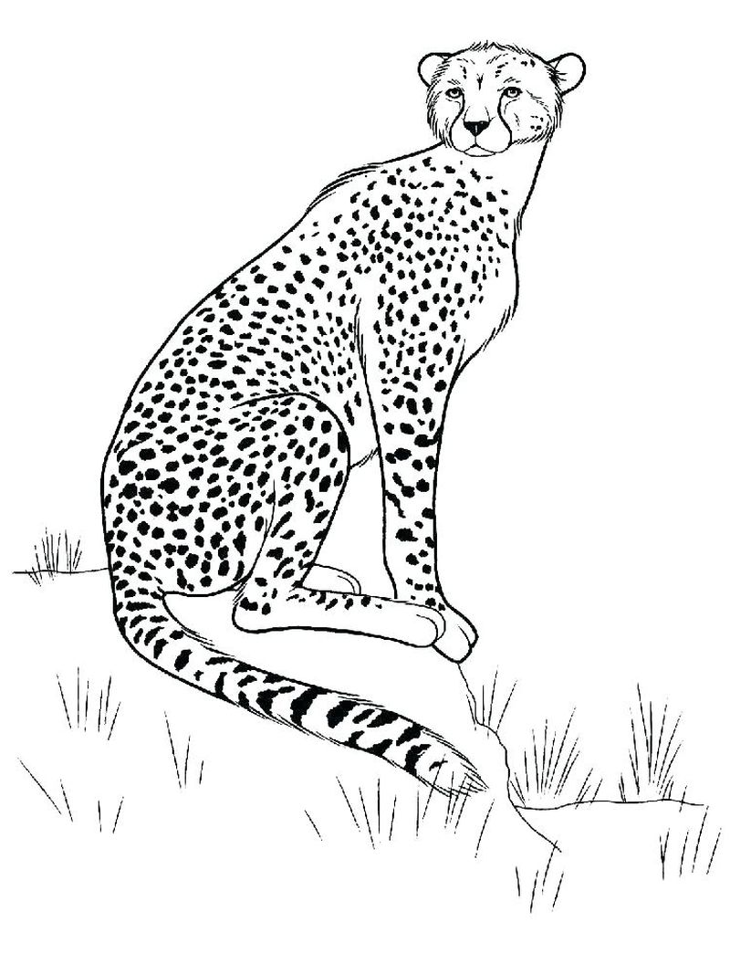 Cheetah Coloring Pages For Kids Printable