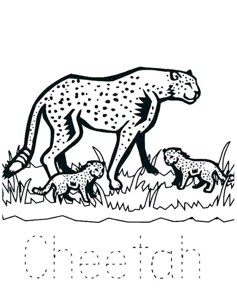 Cheetah Family Coloring Pages