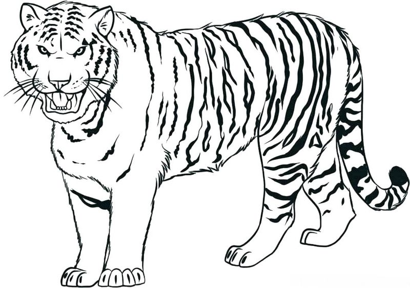 Clemson Tigers Coloring Pages