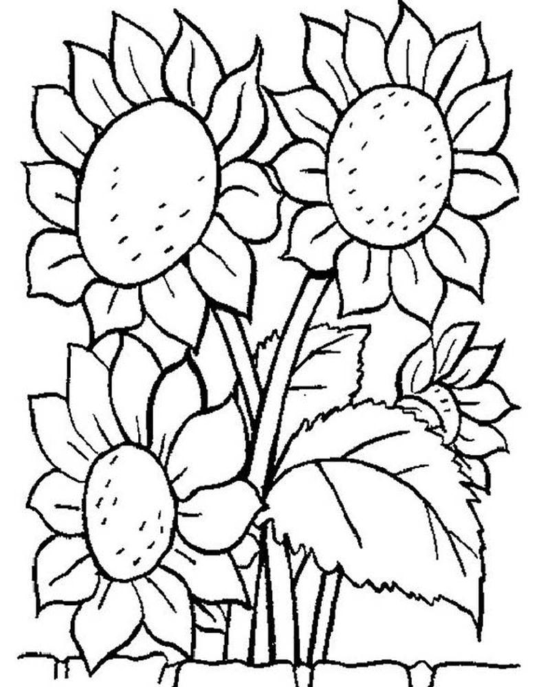 Clipart Of Flowers Coloring Pages
