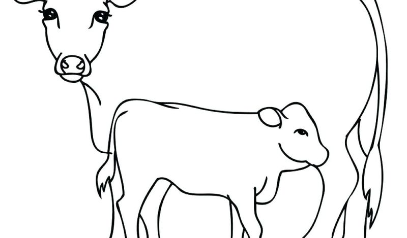 Coloring Pages A Cow Outline