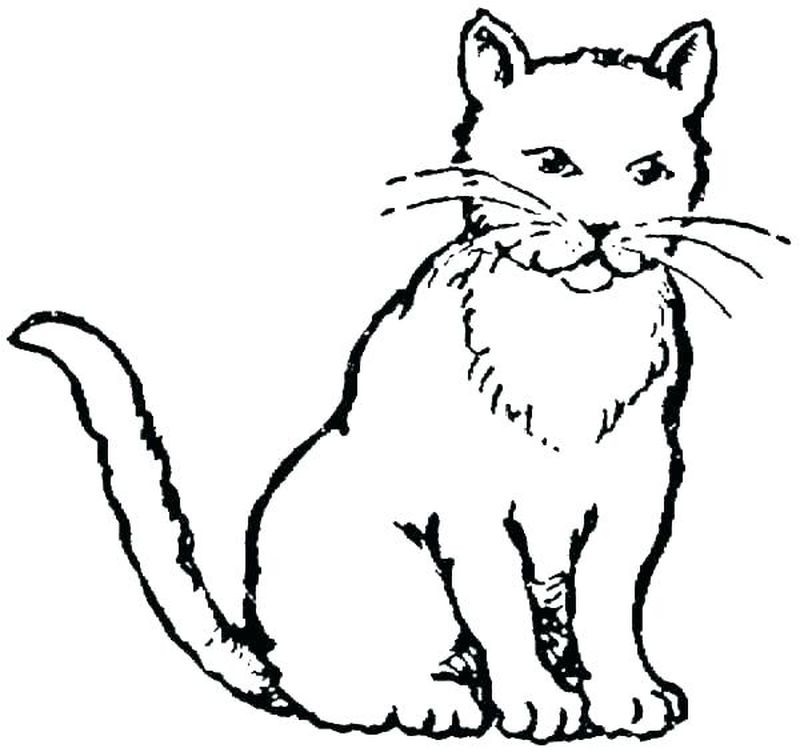 Coloring Pages Adults Cats