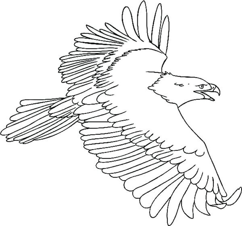 Coloring Pages Bald Eagle And Us Flag
