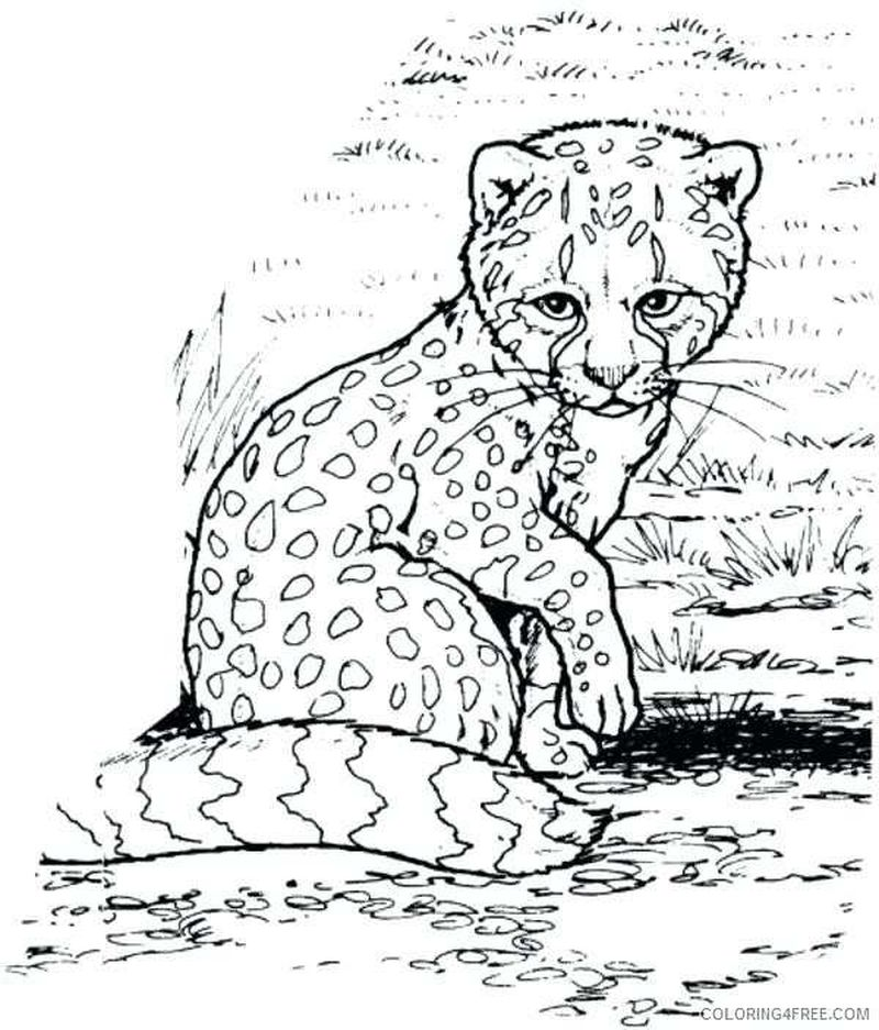 Coloring Pages Cheetah