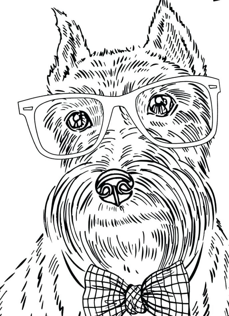 Coloring Pages Chihuahua Dogs
