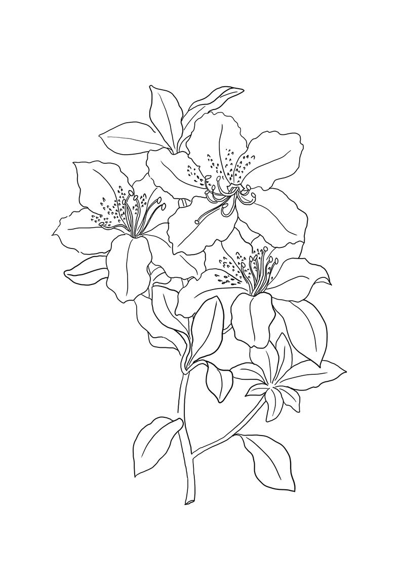 Coloring Pages Complex Flowers