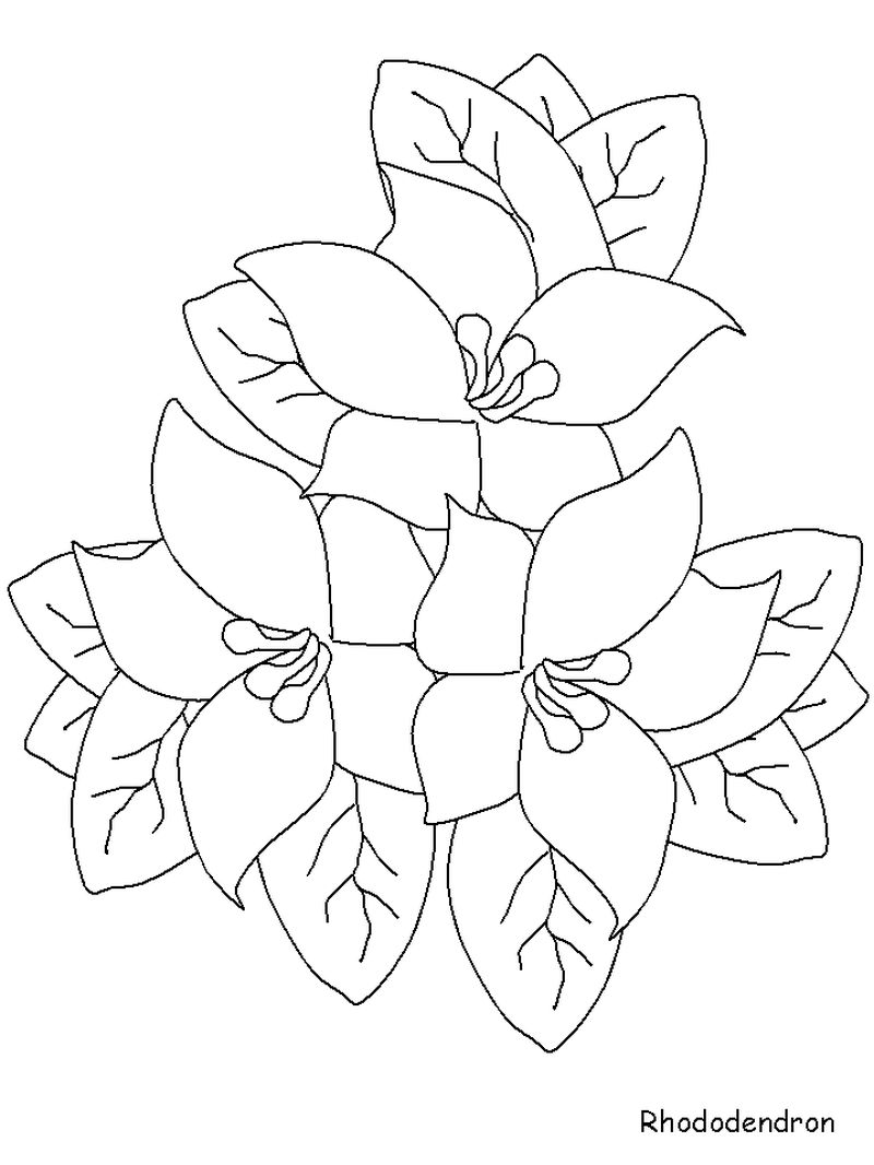 Coloring Pages Complicated Flowers