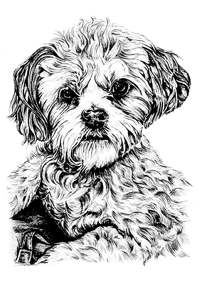 Coloring Pages Dogs Christmas