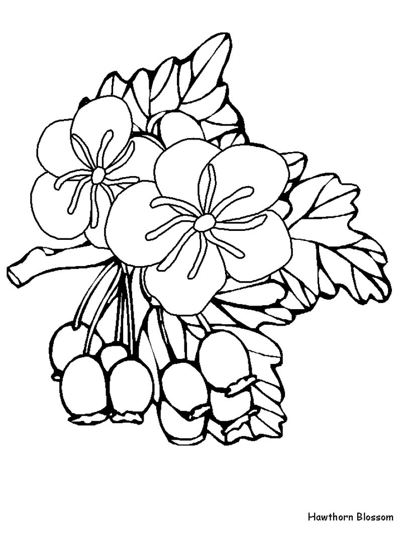 Coloring Pages Flowers And Birds