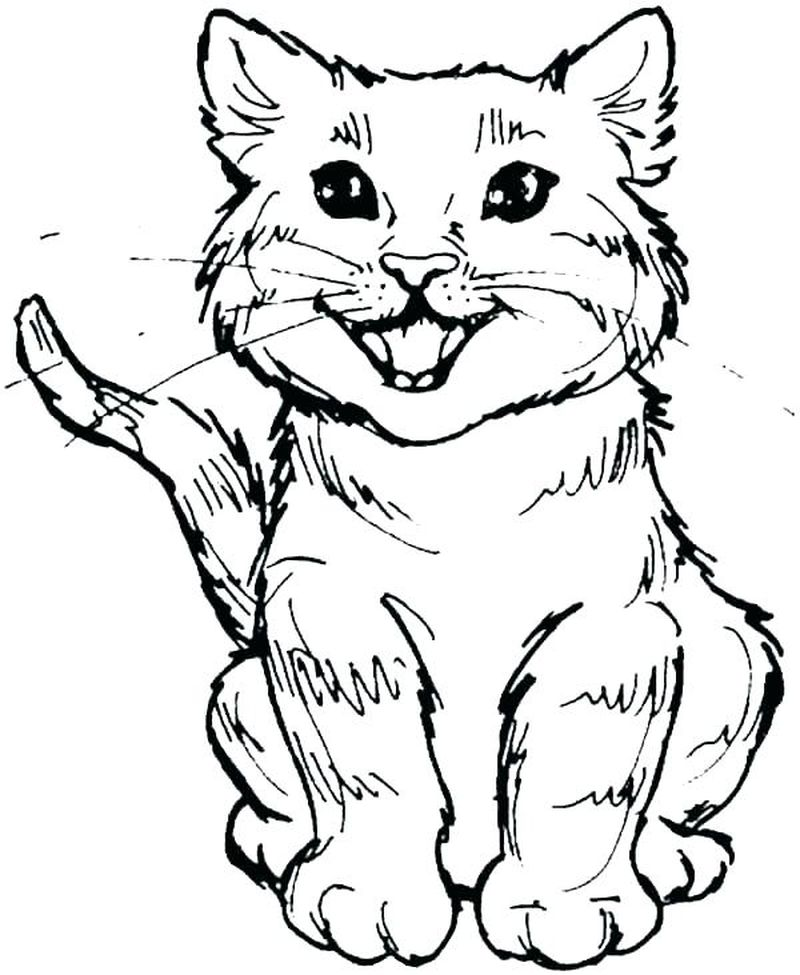 Coloring Pages For Cats And Dogs
