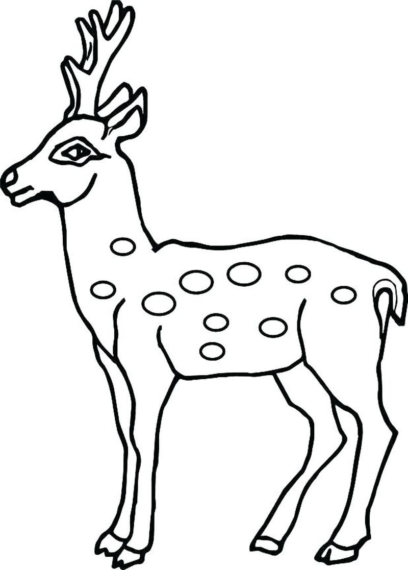 Coloring Pages For Deer