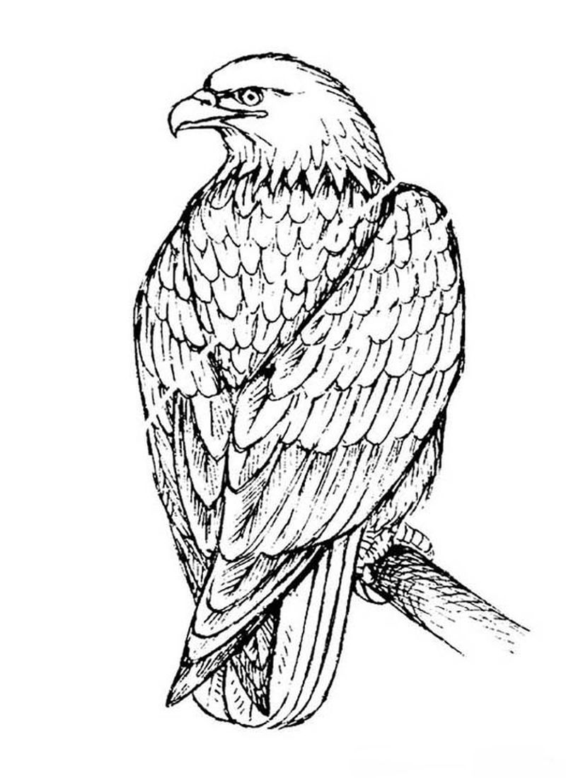 Coloring Pages For Eagle